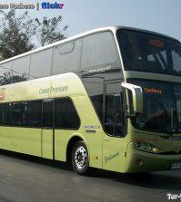 tur-bus-buses